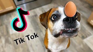 Testing Viral Tik Tok Dog Videos (Egg Challenge & Invisible Challenge)