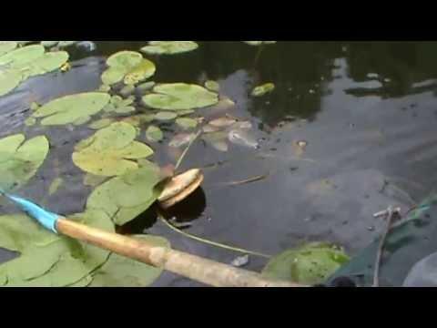 Большая щука Тверская область. видео