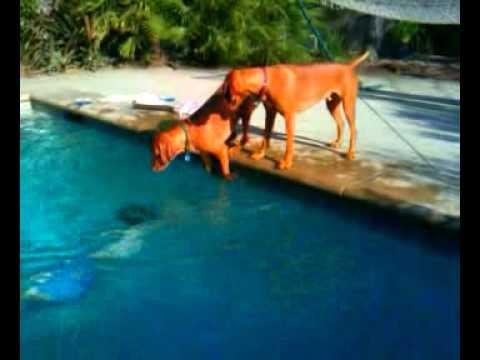 hqdefault - El perro se pone muy nervioso cuando su dueño se mete en el agua