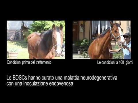 Neoplasia sul giunto piedi nei cani