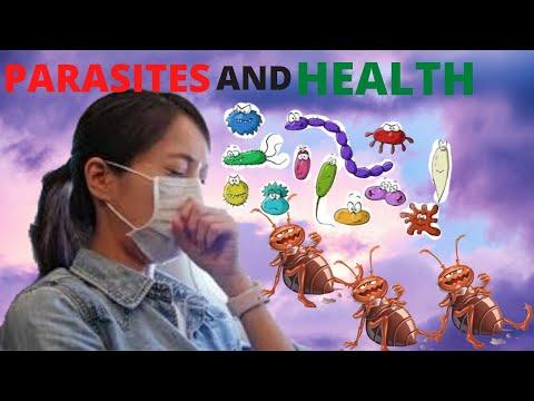 Dermatitis 5 biológiai törvény