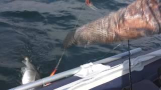 Рыбалка Баренцево море, Кильдин северный, 25 апреля