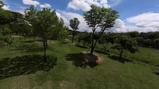 [DRONE FREESTYLE] Tree is my dance partner~ / DJI FPV