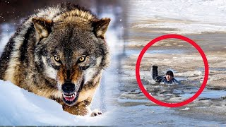 THE WOLF SAVED THE CHILDREN who fell through the ice, mistaking them for puppies!