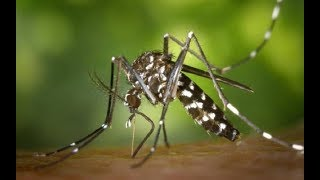 Scientist find deadly Zika virus in West Pokot County | PRESS REVIEW