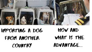 #tamil Importing a dog from other country ... Rules and advantages தமிழ்
