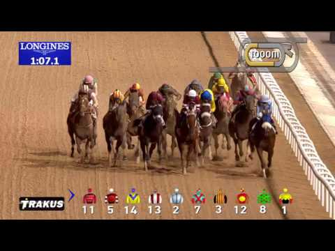 The Best Horse In The World? Arrogate Wins The $10 Million Dubai World Cup