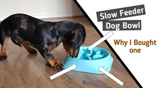 WHY I BOUGHT A SLOW FEEDER DOG BOWL || Miniature Dachshund Puppy! ||