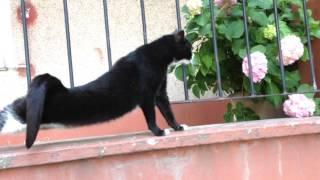 Cihangir's Funny Cats