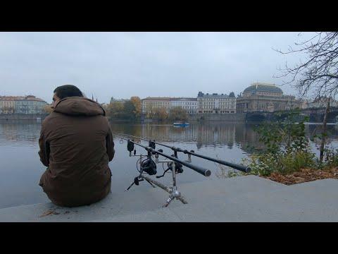 Lov kaprů v centru Prahy
