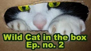 ⏺ Wild Cat in the Box ⏺ Ep. # 2 ⏺