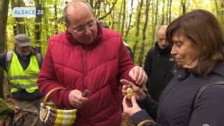 C'est la saison des champignons, découvrez l'art d'une bonne cueillette !