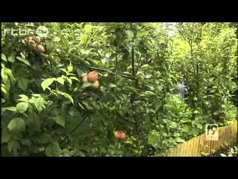 Les petits papiers de nadezda permaculture foret for Jardin permaculture 2015