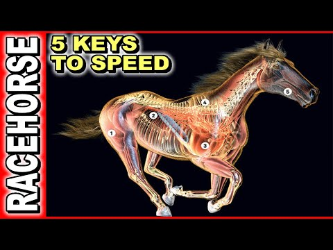 , title : '5 Keys To Race Horse Speed