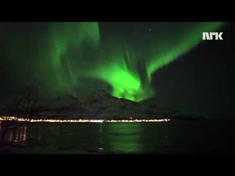 Watch this stunning video of whales swimming under the Northern Lights