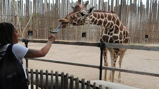 FAMILY FUN DAY AT THE ZOO! | Daily Dose S2Ep259