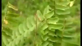 Reviving Ferns