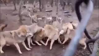 Удивительная природа  Удивительные животные Подборка 2018