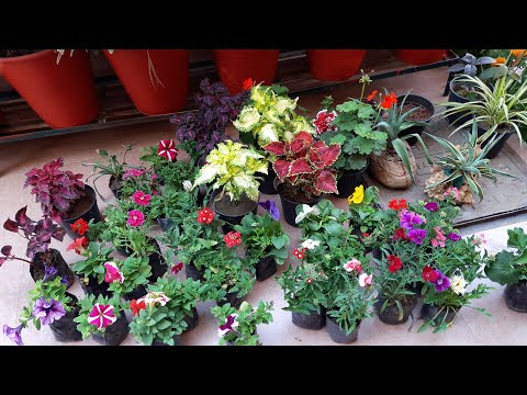 My Today's Plant Shopping || Winter Flowers Shopping