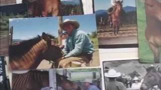 Zorse : croisement zèbre cheval