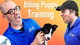 How To Prevent Your Puppy From Biting - Professional Dog Training Tips