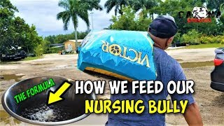 How We Feed Our Nursing American Bullies & Pitbulls Moms 🤓 For Best Milk Production 🤓