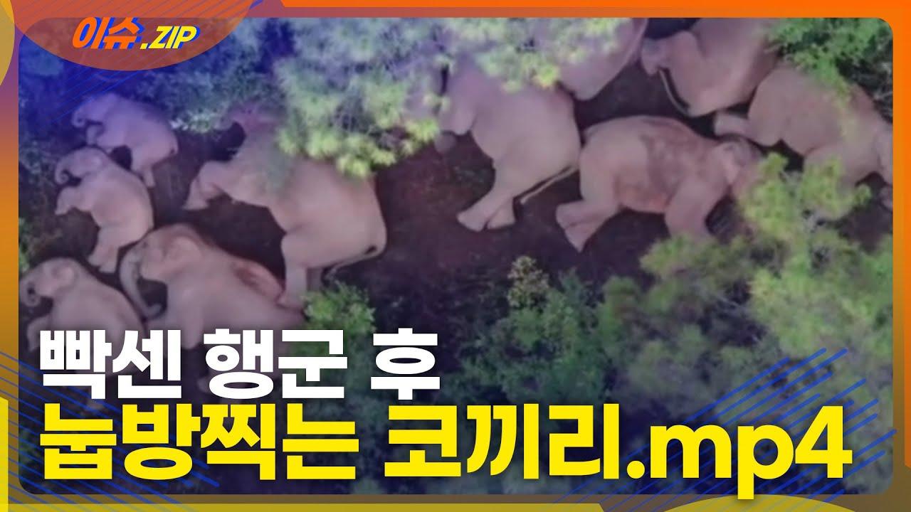 코끼리들이 빡센 행군 후 뻗어버린 ㅎㄷㄷ한 광경 | 본격 잠 오는 영상