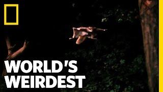 Flying Squirrel | World's Weirdest