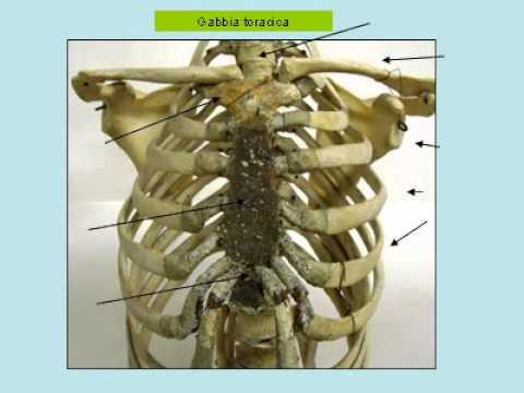 Calendario lunare per il trattamento delle articolazioni