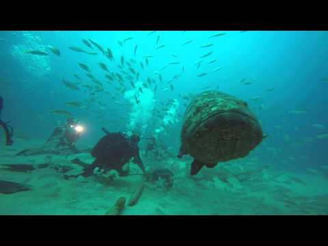 Atlantic goliath grouper en Estados Unidos