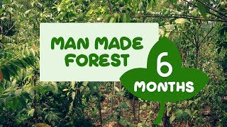 Man Made Forest at Puliyarakonam  After Six Months