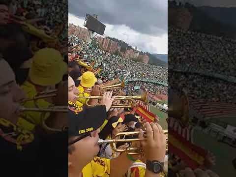"""""""Pereira nacional 26 de enero 2020"""" Barra: Lobo Sur • Club: Pereira"""