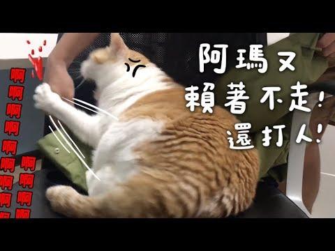 可憐的貓奴 被阿瑪霸佔位子