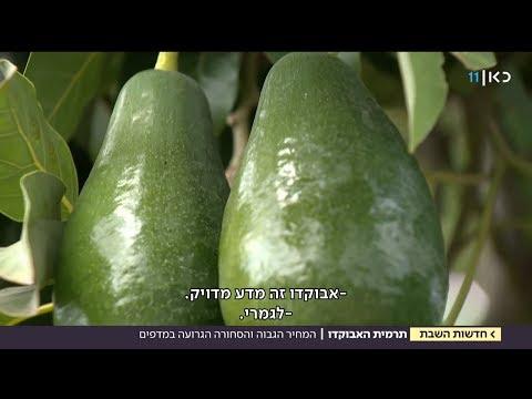 תרמית האבוקדו הגדולה: כך תזהו פרי בשל וראוי למאכל