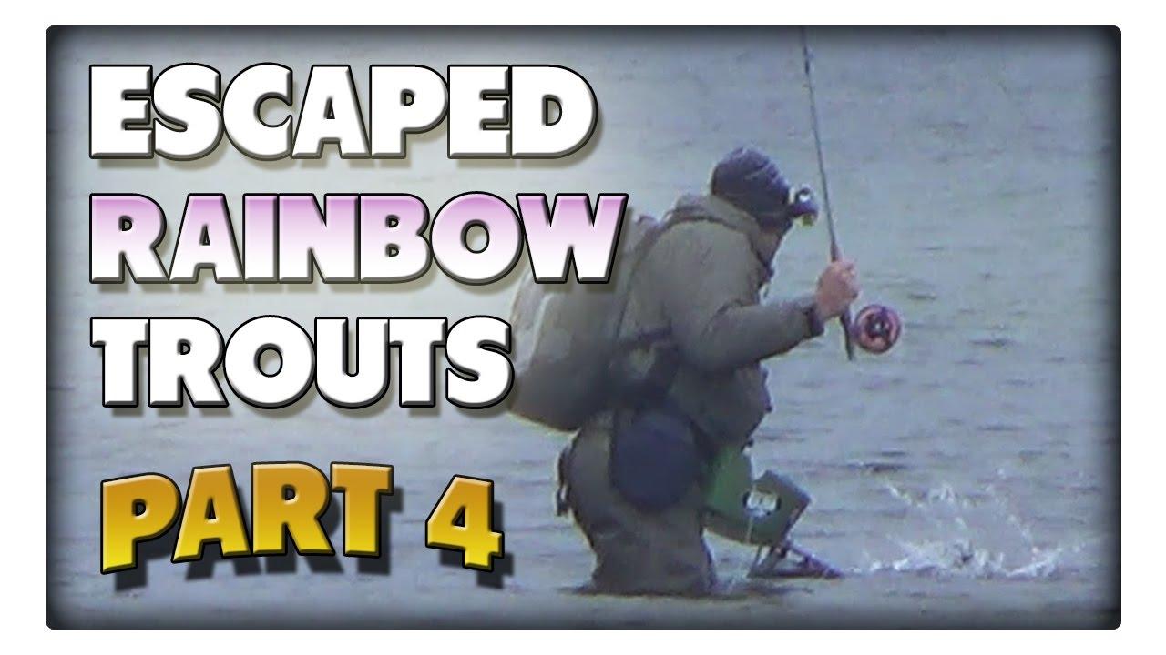 Angeln auf die ausgebrochenen Regenbogenforellen! Teil4