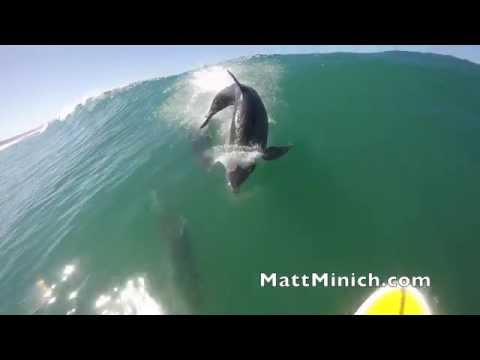 Dolphin Ecards Matt Minich and Peter Nelson paddling and surfing..
