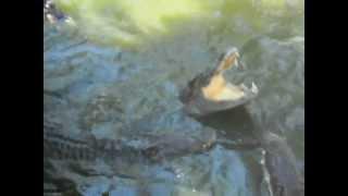 Рыбалка на крокодилов во вьетнаме