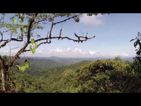 Bosque lluvioso en Ecuador, Mashpi Lodge