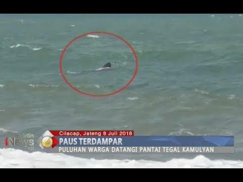 Tiga Paus Terdampar di Pinggir Pantai Cilacap, Diduga Akibat Terseret Gelombang Tinggi - BIP 09/07