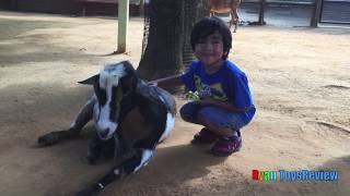 ANIMALS AT THE ZOO with Ryan ToysReview!