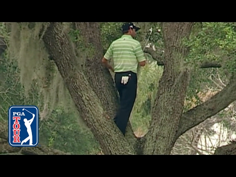 Sergio Garcia climbs a tree to hit one-handed shot at Bay Hill