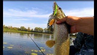 Всё таки заклевала! Рыбалка на спиннинг в затоне реки Оки!Твичинг воблеров!
