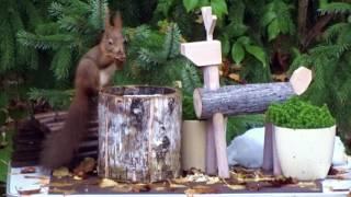 Wir suchen das schnellste Eichhörnchen Deutschlands - Kandidat 6 Mr. Bamboo aus Regensburg
