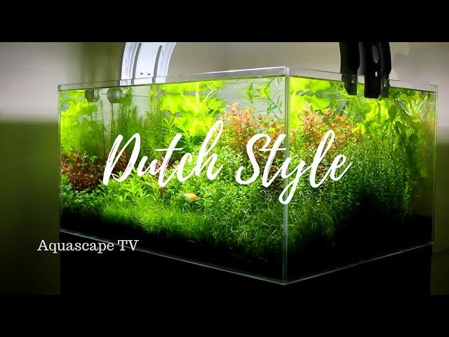 2018 Beautiful Classic Dutch Style Planted Aquarium Setup | Aquascape TV