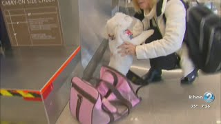 American Airlines grounds emotional-support animals from flights