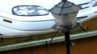 Purple Finch at feeder