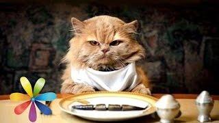 Смотреть онлайн Рекомендации ветеринара по питанию кошек