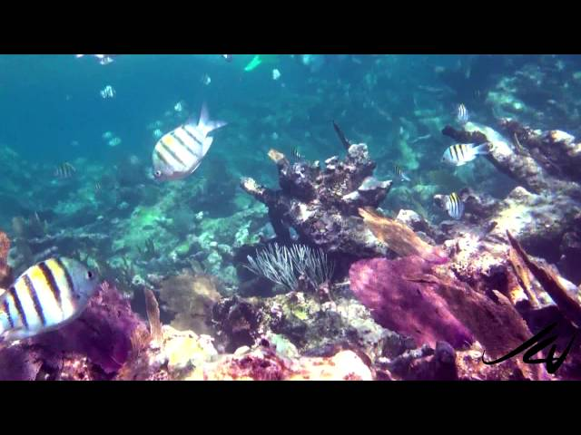 Colorful Tropical Fish of the Reef - Snorkeling Mexico - YouTube