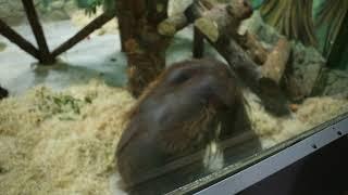 Новый обитатель зоопарка