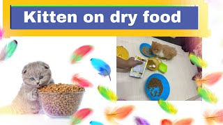 Kitten care | weaning kittens with dry food | how to switch kitten on dry food |kitten age 7 weeks